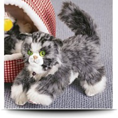 Gray And White Fluffy Kitten