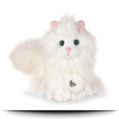 Buy Persian Cat